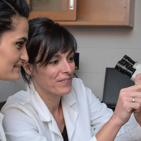 Dr. Gemma Casadesus Smith, right, associate professor of biological sciences, works with a student in her lab.