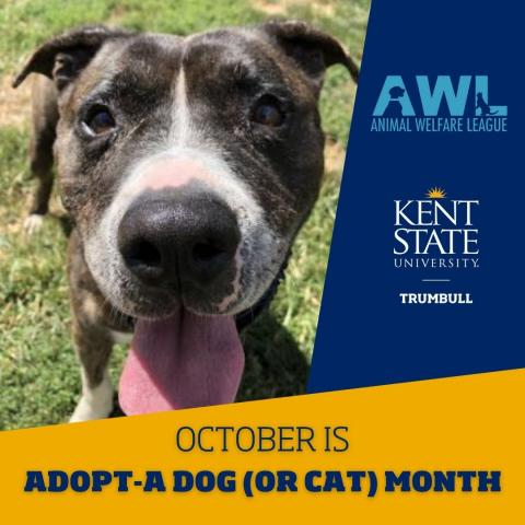 Adopt-A-Dog (or Cat) Month