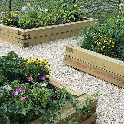 DeWeese Health Center created a community garden focused on growing fresh produce, learning best-practice gardening techniques and managing stress through connection with nature.