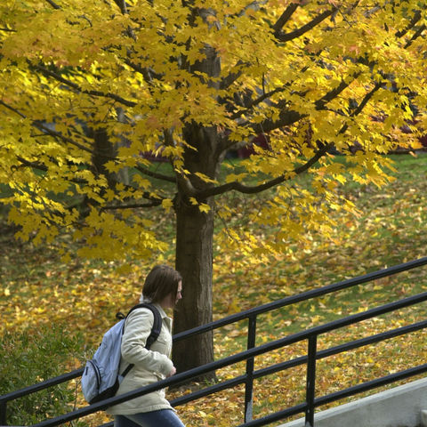 Fall payments can be mailed to Kent State University or paid online