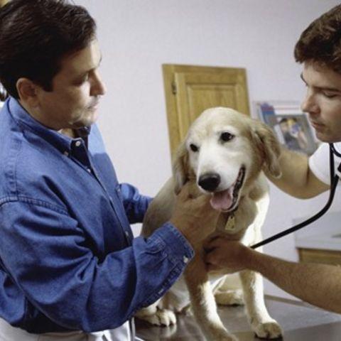 A veterinarian.
