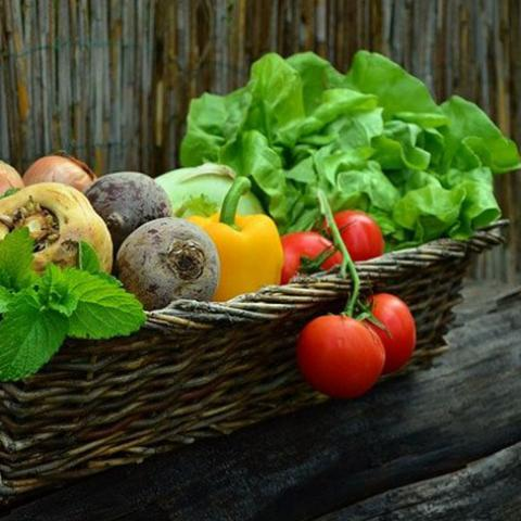 Summer Garden Seminar: Reaping the Benefits