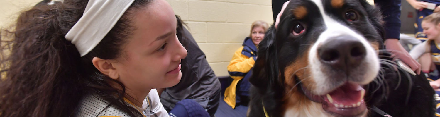 A student pets a therapy dog during finals week, a part of the Dogs on Campus program