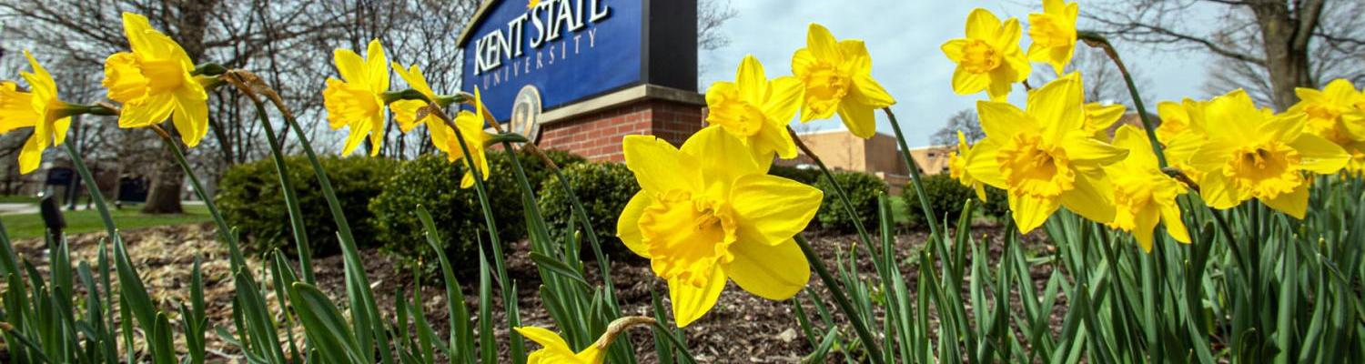 Kent State sign with daffodils