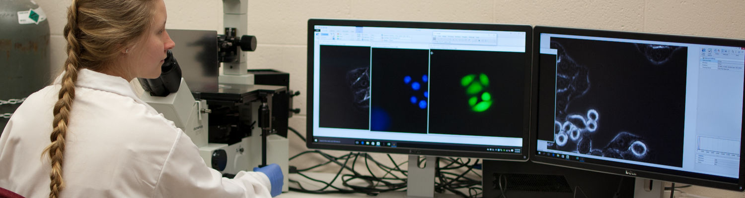 An undergraduate student researcher uses a microscope in the Zheng lab.