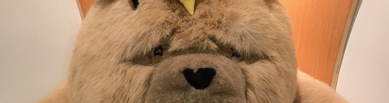 Dewey the Bear