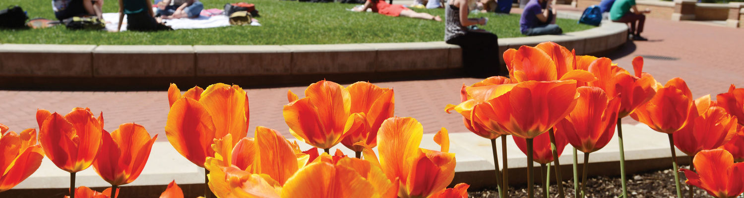 Students relax on the green dot at Risman Plaza on a bright, sunny day