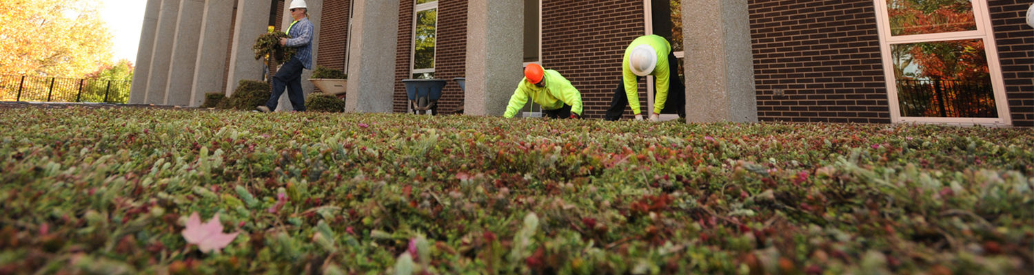 Installation of a green roof at Taylor Hall
