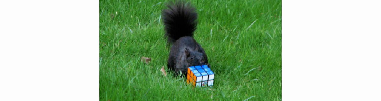 squirrel cube