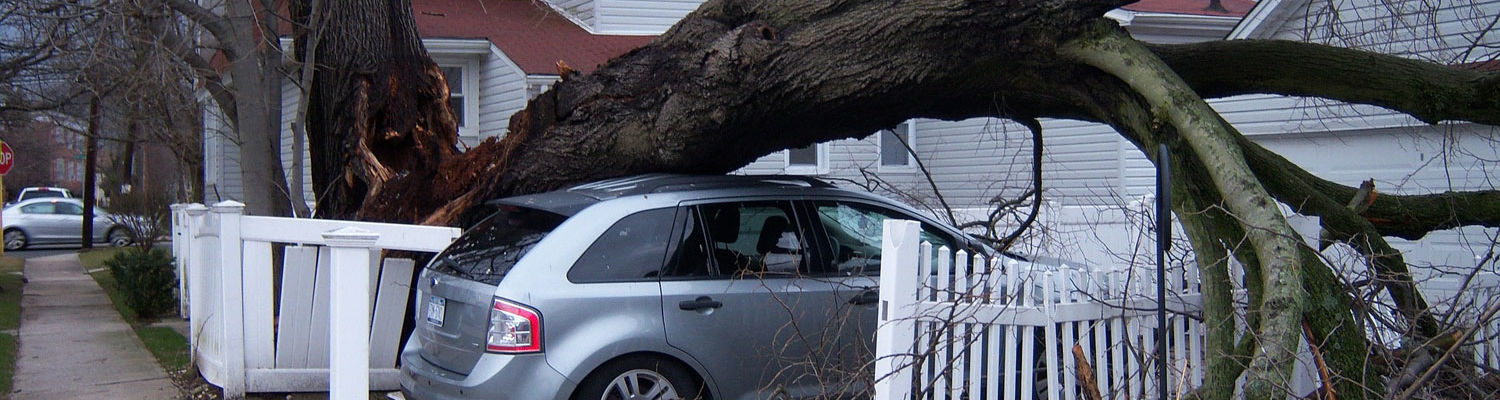 Tree fallen on car, property damage insurance claims