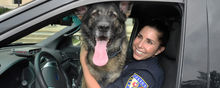 Kent State Police Services is celebrating the five-year anniversary of its first K-9 unit, which features 7-year-old German Shepherd Coco and her handler, Officer Anne Spahr.