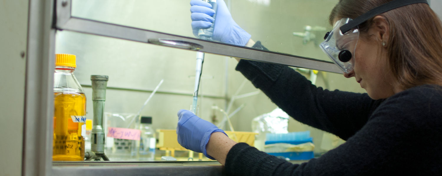 An undergraduate student performs research in a biochemistry laboratory.