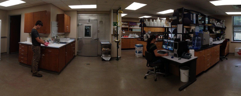 Lab Main