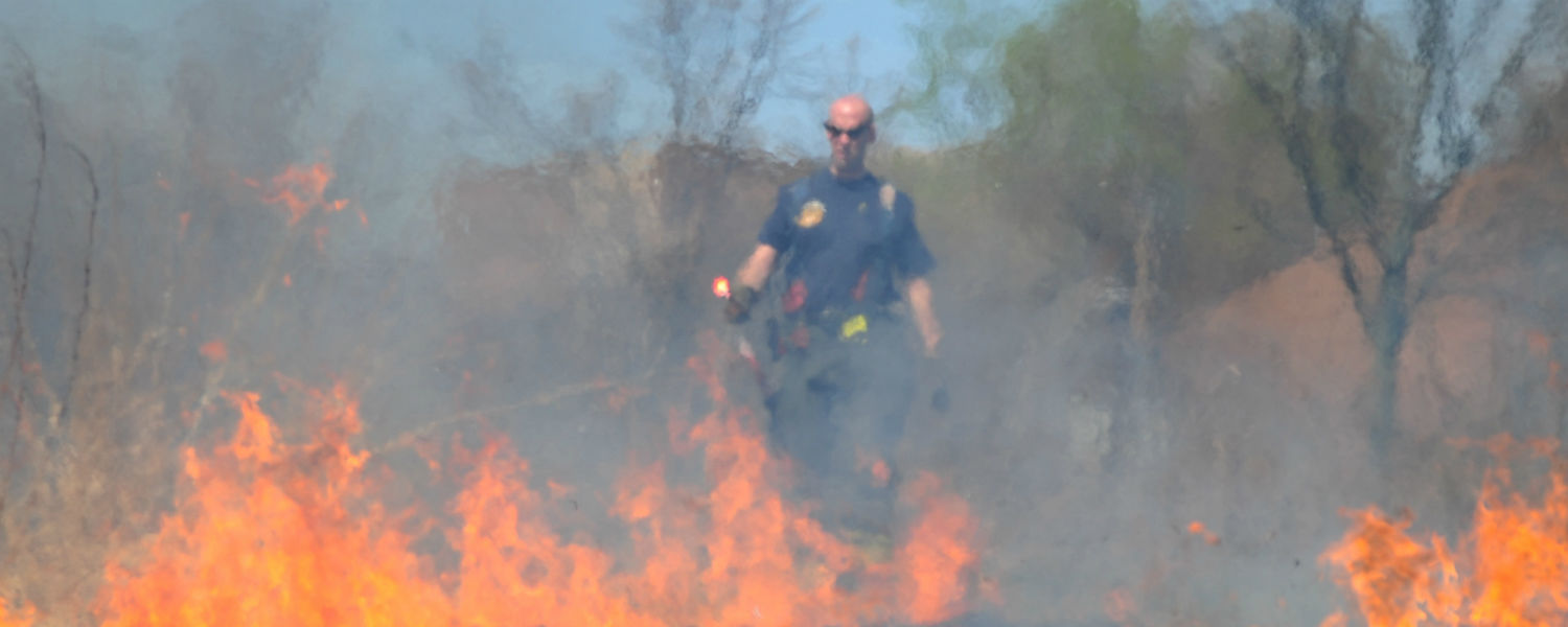 A City of Kent firefighter lights a blaze in the prairie grass that grows behind the Student Recreation and Wellness center on the campus of Kent State University. The prairie grass is burned once a year to coordinate with the natural cycle of the grass.