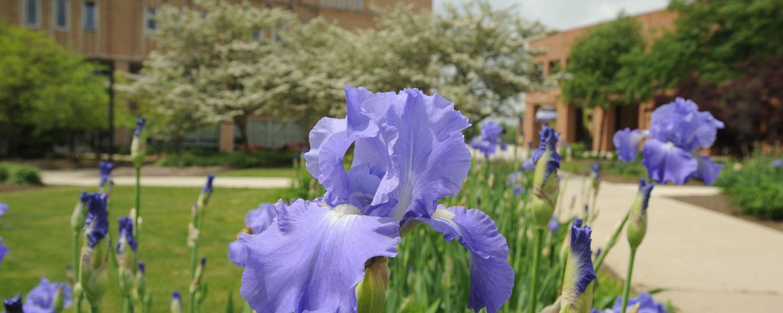 Garden by University Library