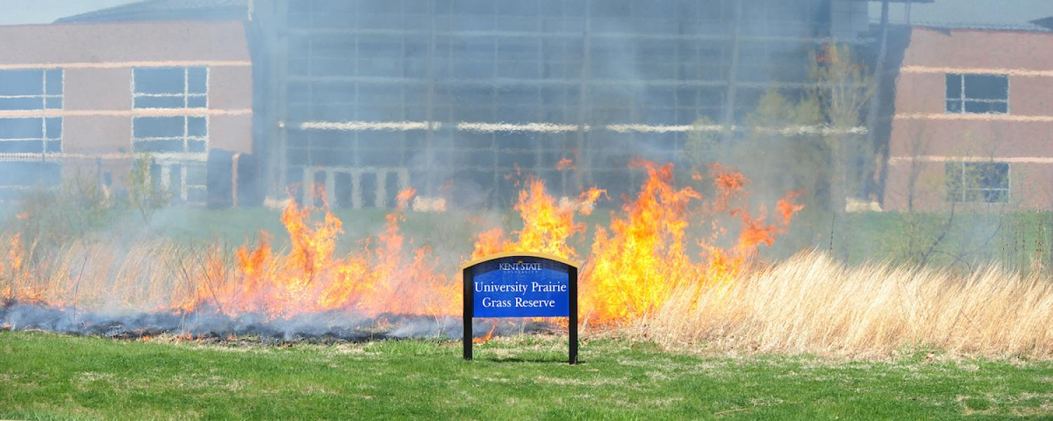 A blaze burns the prairie grass that grows behind the Warren Student Recreation and Wellness Center during a controlled burning by the Kent Fire Department.
