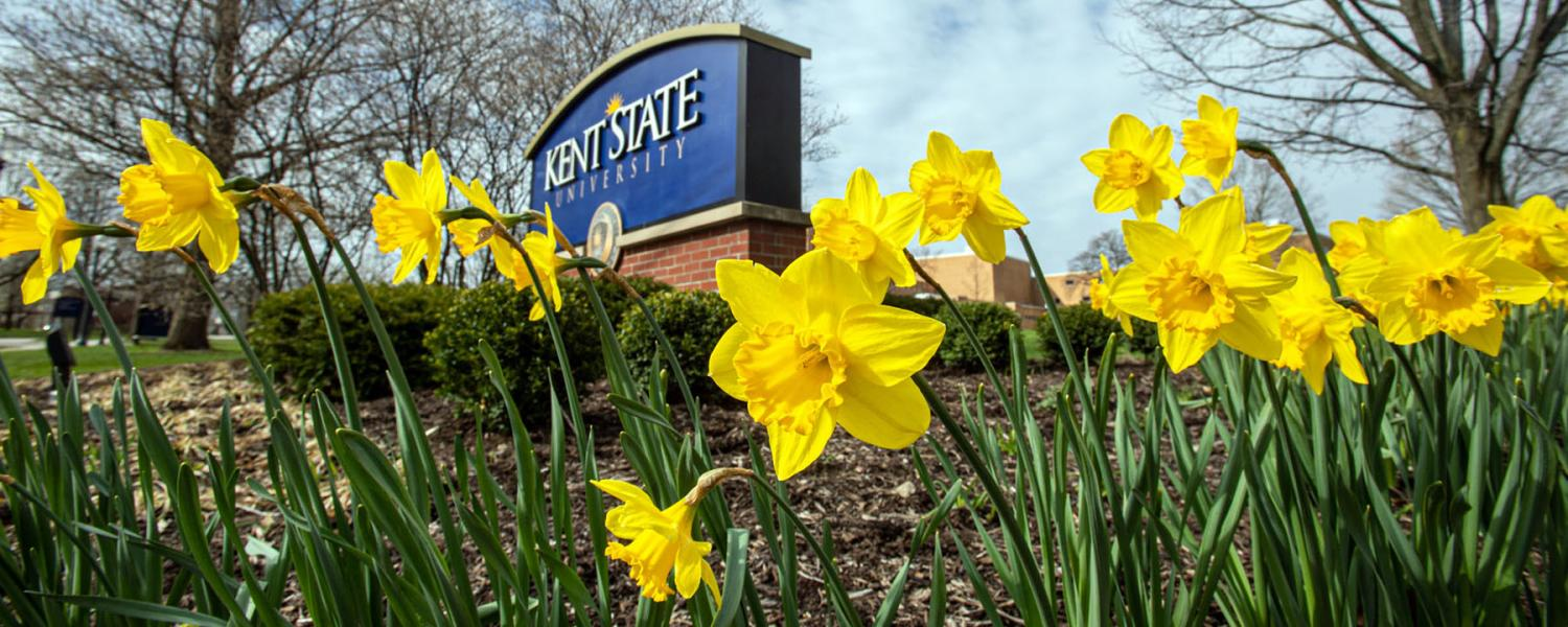 Daffodils bloom by a Kent State University sign.