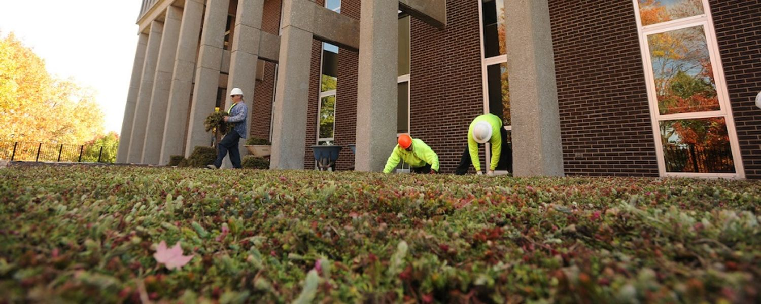 Workers install a green roof onto the lower roof of Taylor Hall at Kent State University. The plants will help insulate the building, control water runoff and provide less glare.