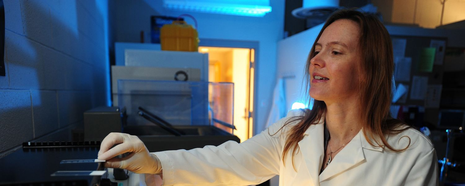 Heather Caldwell, Ph.D., professor of biological sciences at Kent State University, was awarded a $450,000 grant to study how oxytocin affects the development of the female and male brain.