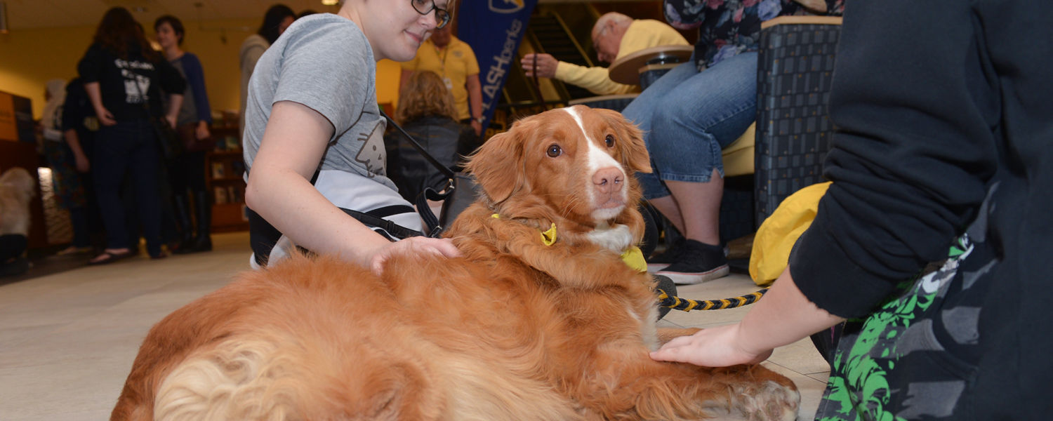 Kent State students gather around a Nova Scotia Duck Trolling Retriever during the Stress-Free Zone in the library.