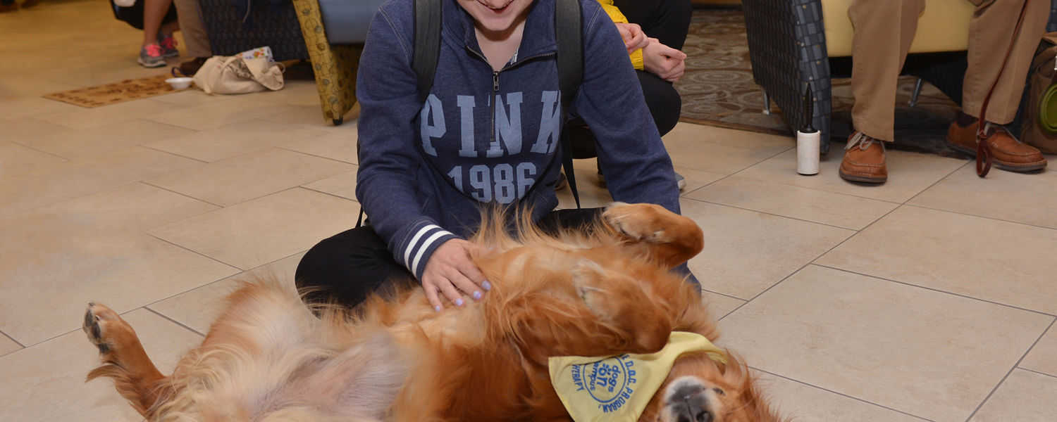 A Kent State student stops by the Stress-Free Zone in the library during finals week to unwind with a happy therapy dog.