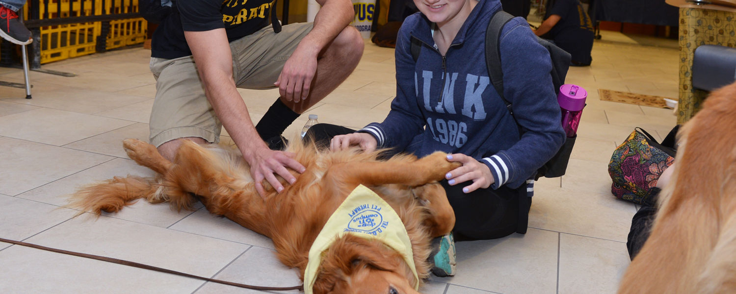 Kent State students stop by the Stress-Free Zone in the library during finals week to unwind with a happy therapy dog.