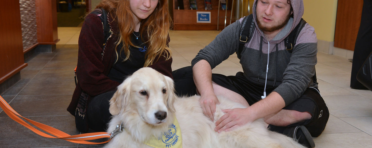 Kent State students pet a golden retriever in the Stress-Free Zone of the library during finals week of the 2016 Spring Semester.