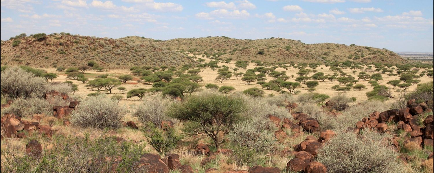 Grassland with Shrubs in Magersfontein (near Kimberley, South Africa), 2010