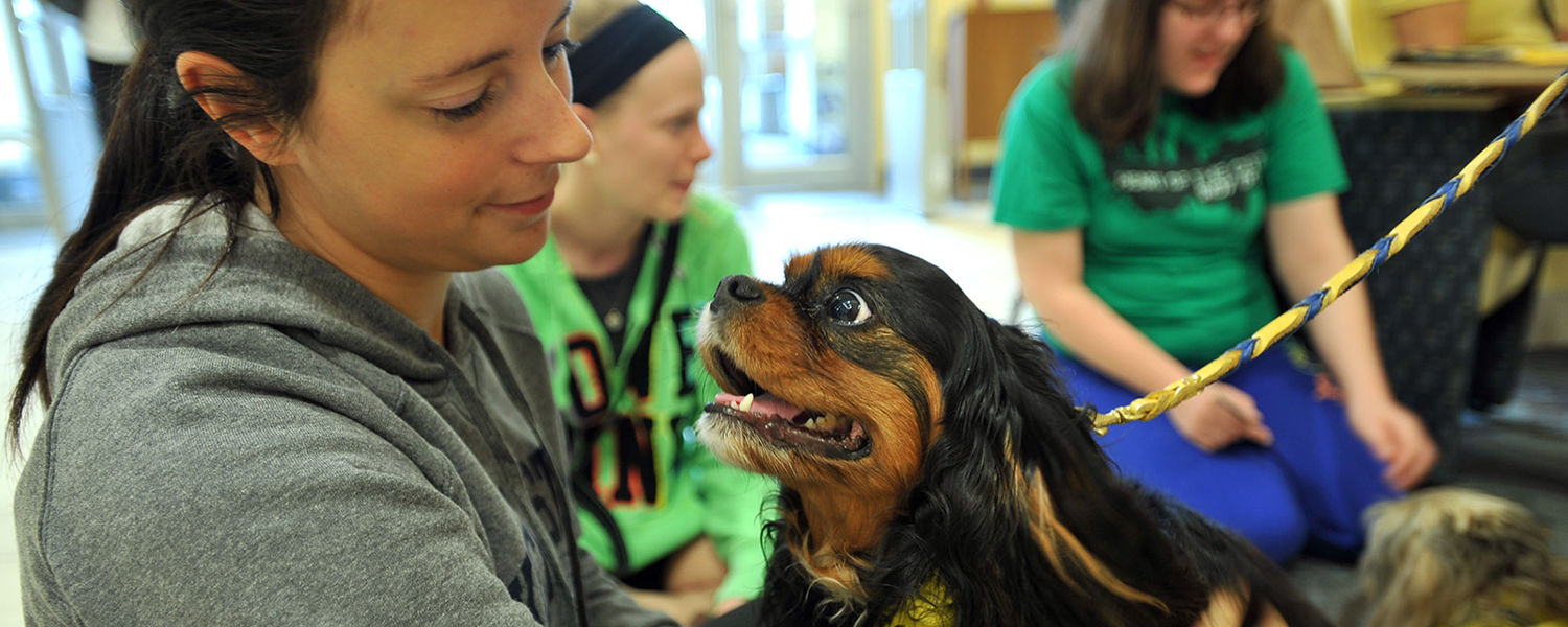 A Kent State student enjoys the company of a pet therapy dog at a Stress-Free Zone event held during finals week.