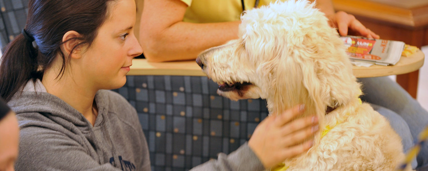 A Kent State student pets a dog during the Stress-Free Zone event held in the lobby of the library during finals week.