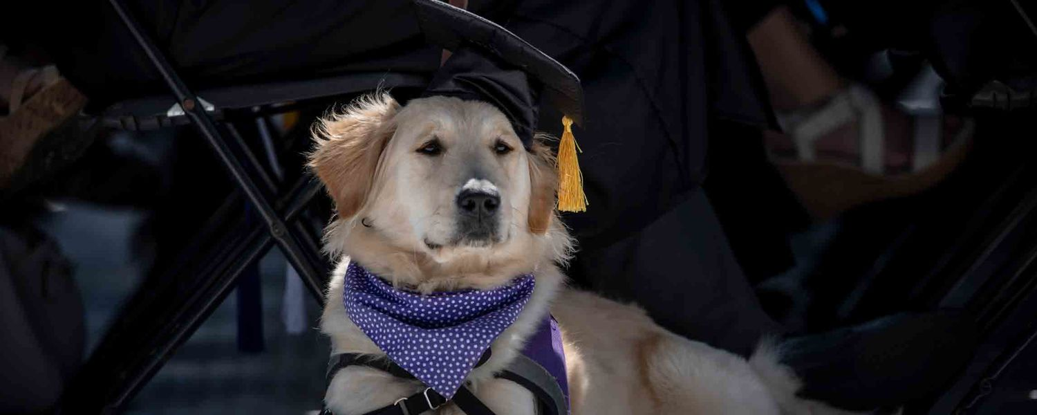 A furry graduation cap bearer relaxes during Kent State's One University Commencement at Dix Stadium.