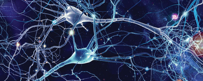 Brain Health Image