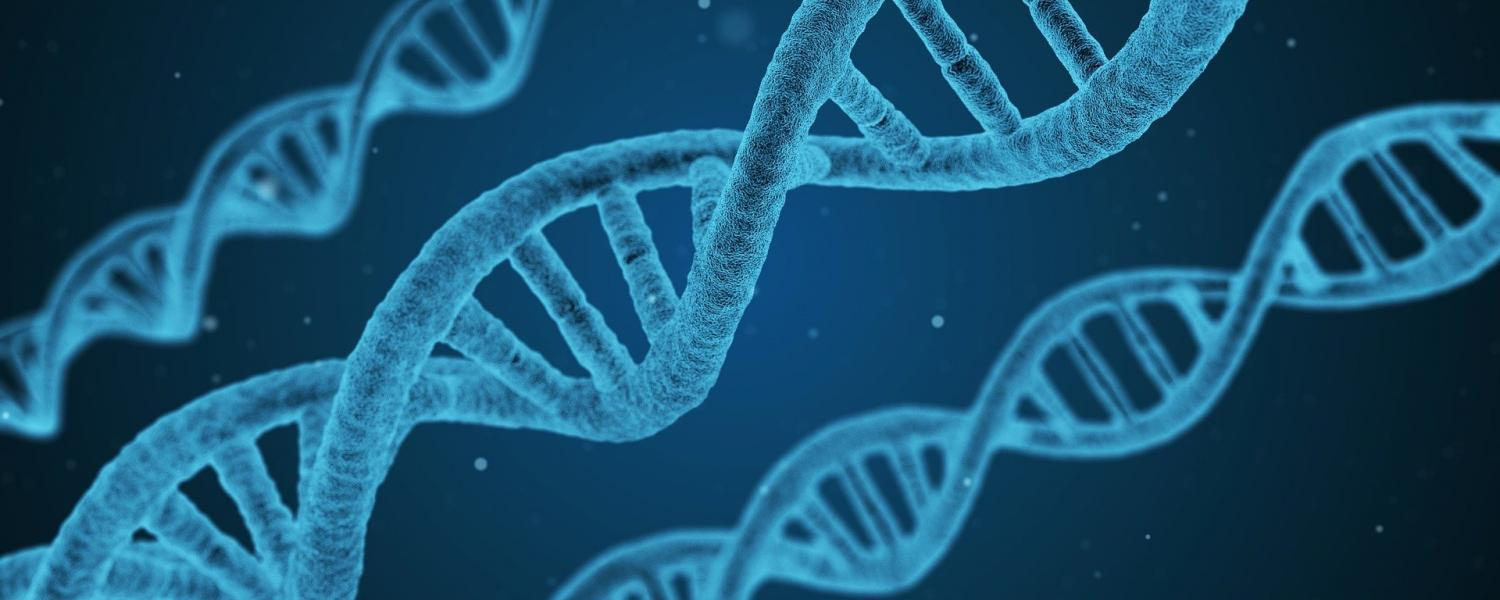 Image of DNA by Arek Socha from Pixabay