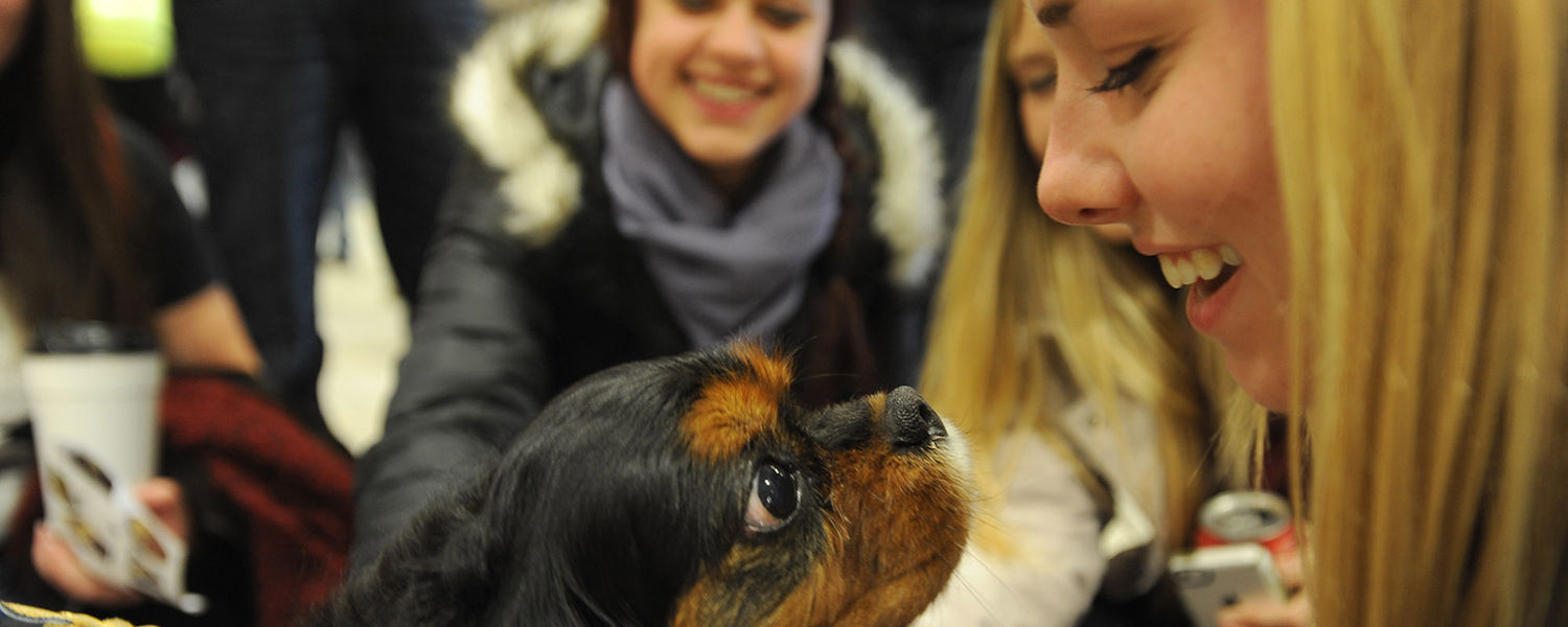 A therapy dog is the center of attention during the Stress-Free Zone event held in the University Library during finals week.
