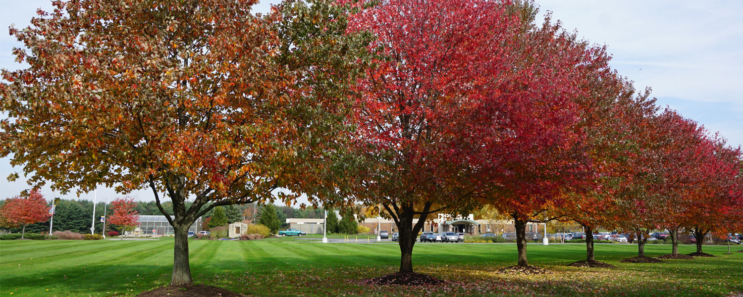 Geauga Campus in the fall.