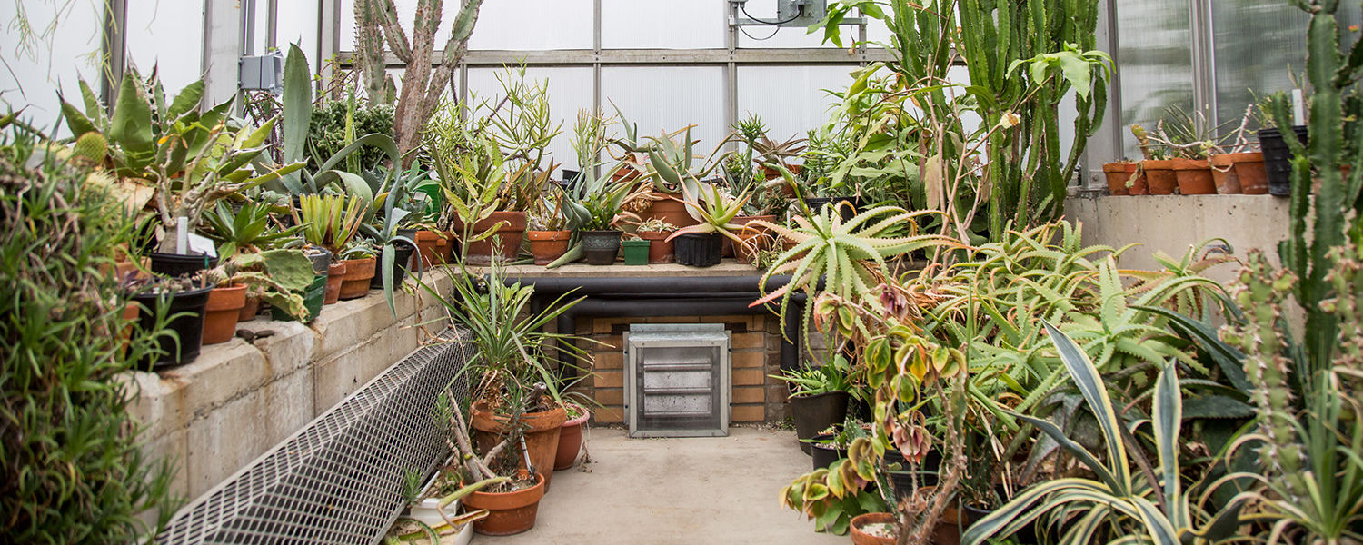 The Herrick Conservatory is used as a classroom but is open to the public weekdays from 9 a.m. until 5 p.m.