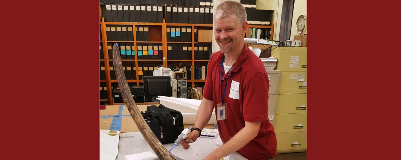 Dr. Green examines a mastodon tusk.