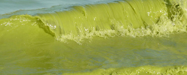 Harmful algal bloom in Lake Erie, Sept. 4, 2009. NOAA/Flickr