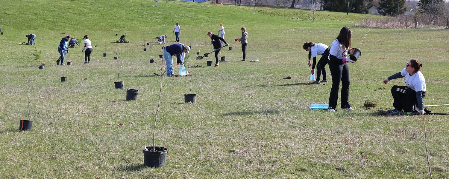 A group of Kent State University Students, Alumni and other volunteers plant trees at the new climate change grove.