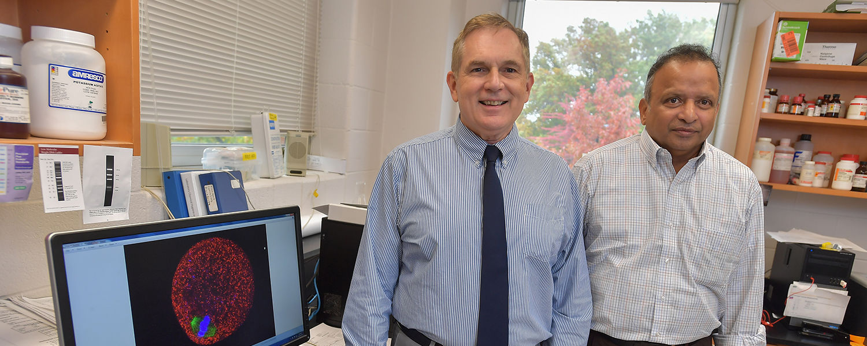 Doug Kline (left) and Srinivasan Vijayaraghavan (right), both professors in Kent State University's Department of Biological Sciences, have received NIH grants to study reproductive challenges.