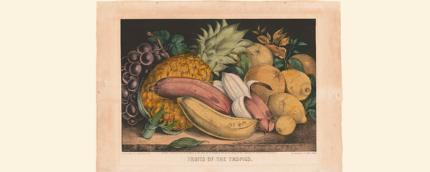 Fruits of the Tropics, lithograph, 1871, Currier and Ives