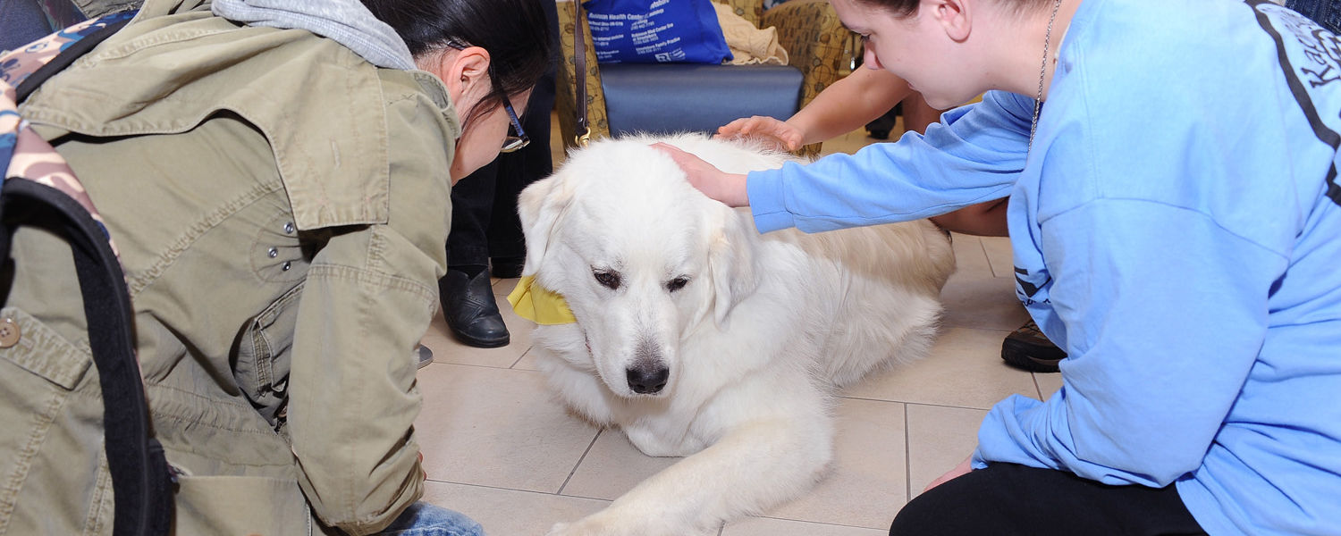 A therapy dog enjoys being petted by Kent State students during the Stress-Free Zone event in the library.