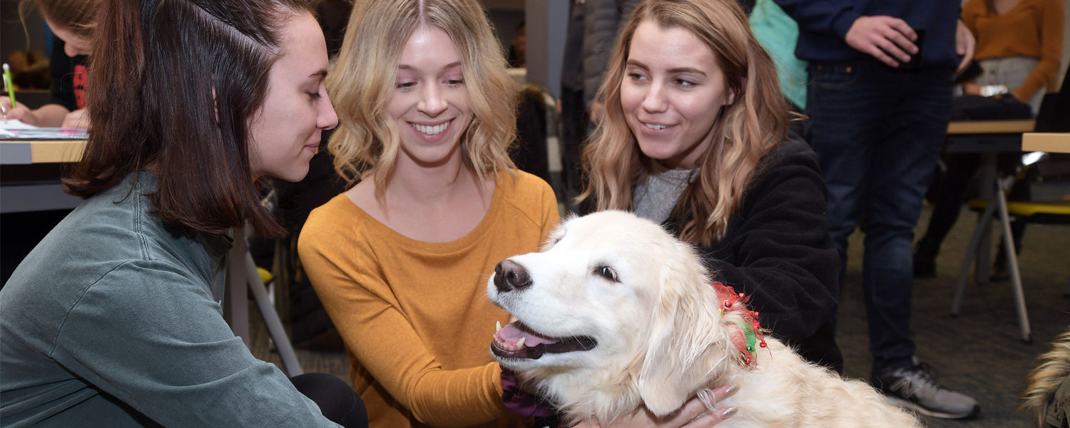 Kent State student enjoy the pet therapy dogs during the Stress-Free Zone event presented by University Libraries.