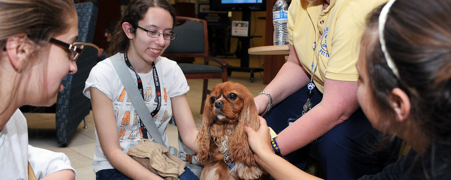 A therapy dog enjoys receiving attention from Kent State students during the Stress-Free Zone event in the library.