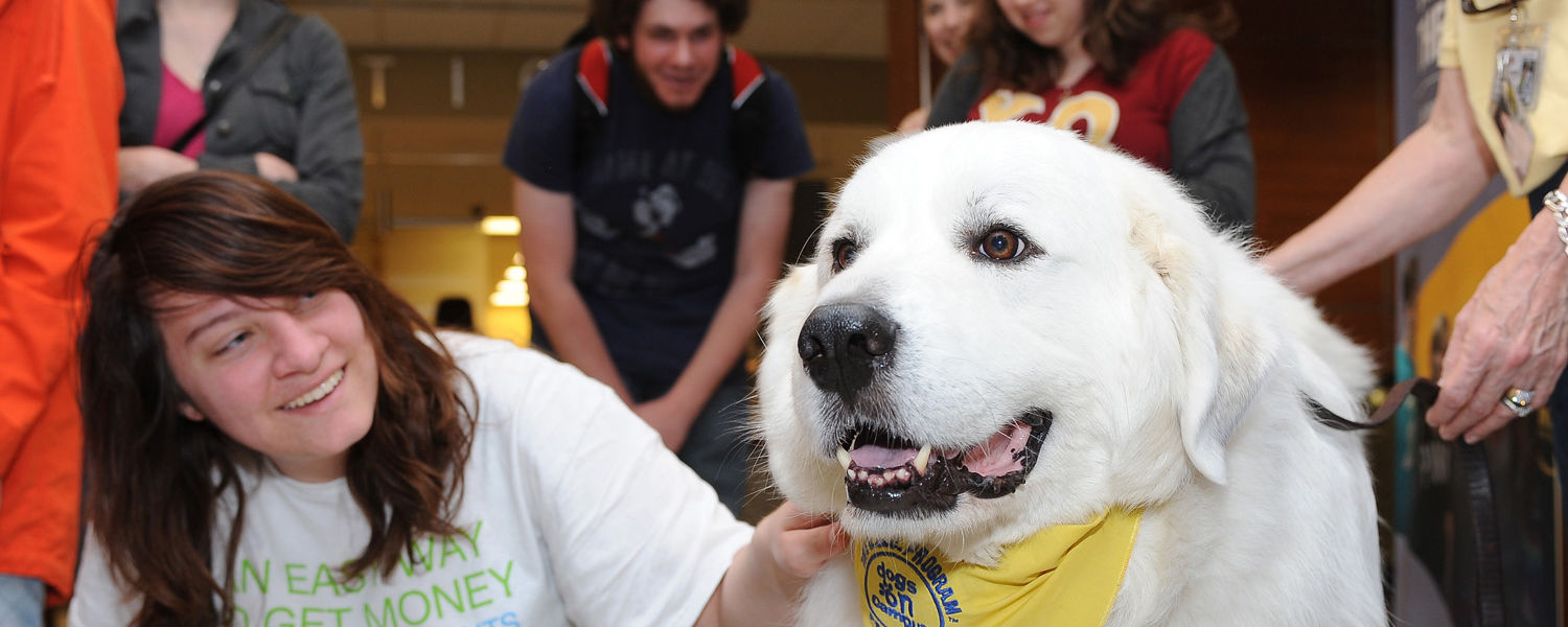 Kent State students line up for some relaxing time with a friendly dog during the Stress-Free Zone event in the library.
