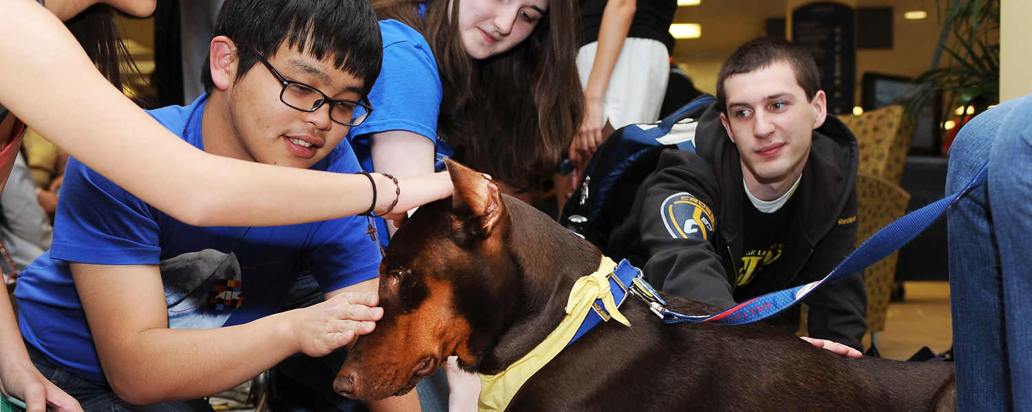 Kent State students pet a chocolate Doberman Pinscher during the Stress-Free Zone event in the library.