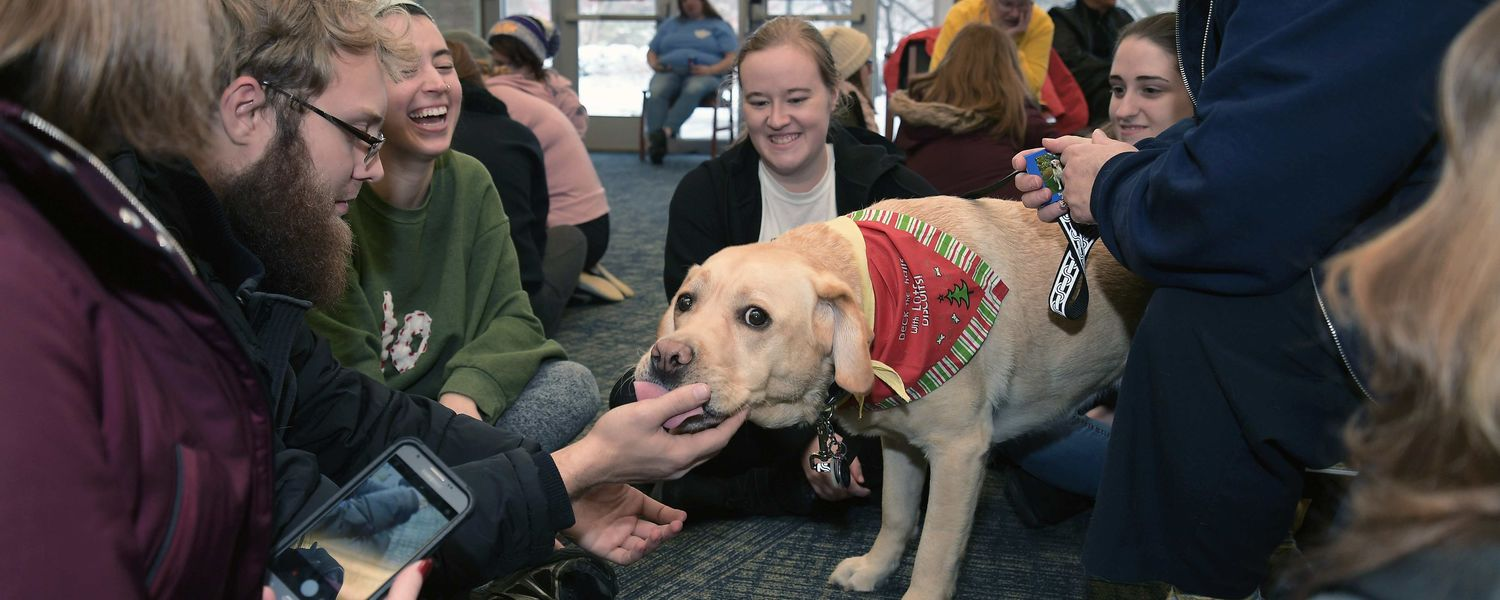 Bentley, a Labrador retriever, greets a new Kent State student to the group with a lick during the Stress-Free Zone in the library.