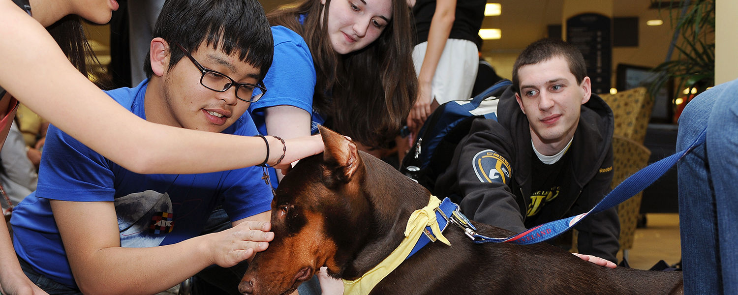 Kent State students enjoy the company of a therapy dog during the Stress-Free Zone event in the library.