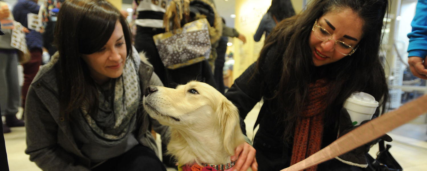Kent State students gather around a Great Pyrenees therapy dog in the lobby of the University Library. The visit by therapy dogs is part of the Stress-Free Zone event during finals week.