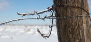Frozen barbed wire on a fence